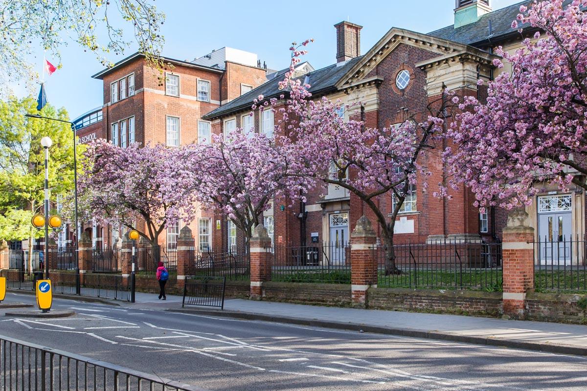 trees outside hampstead school